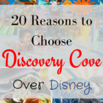 20 Reasons to choose Discovery Cove over Disney Pt. 1